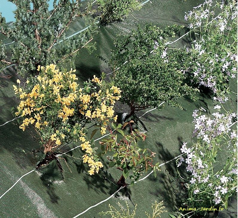 Toile De Paillage Tissee Verte Nortene 2 10m X 20m Agrosol Achat Pas Cher