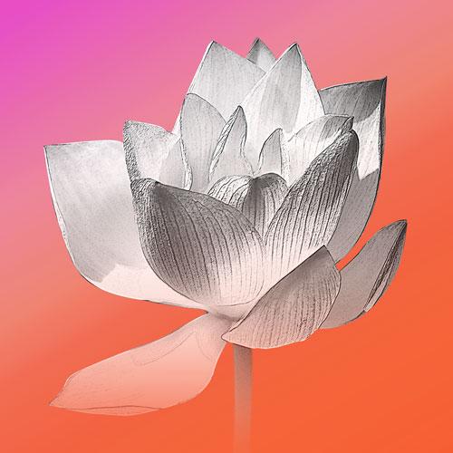 Bild Lotusblume, Mina, Lotusblume, Bilder online kaufen, Bilder für das Wohlbefinden, Wellnessbilder, Energiebilder, Feng Shui bilder, Wanddeko, Leinwandbilder