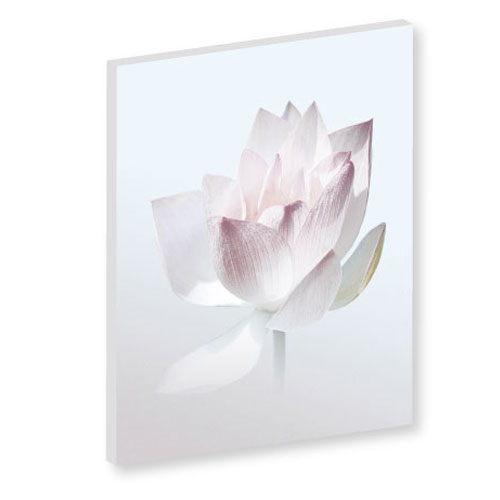 Wandbild Lotusblume Tender Wandbild Weiss