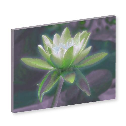 Bild Lotusblume, Mina, Lotusblume, Bilder für das Wohlbefinden, Wellness, Energiebilder, Feng Shui bilder, Wanddeko, Leinwandbilder