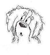 Berner sennenhunde Gifs Bilder Berner sennenhunde Bilder
