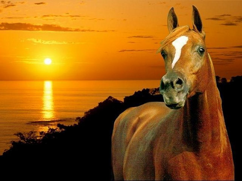 Pferde Bild - Animaatjes paarden 20815