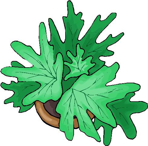 Clipart  Clipart plant animaatjes 276
