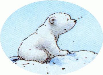 Eisbär Bilder Kostenlos