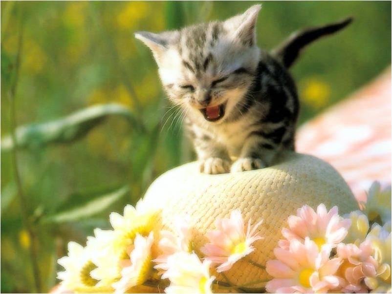 Cute Billi Wallpaper Katten Achtergronden Animaatjes Nl