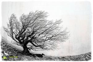 Lingas, photomontage avec texture