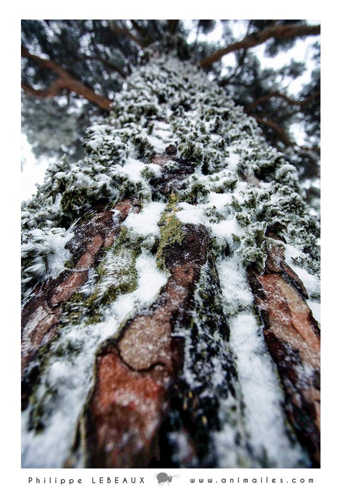 Forêt02