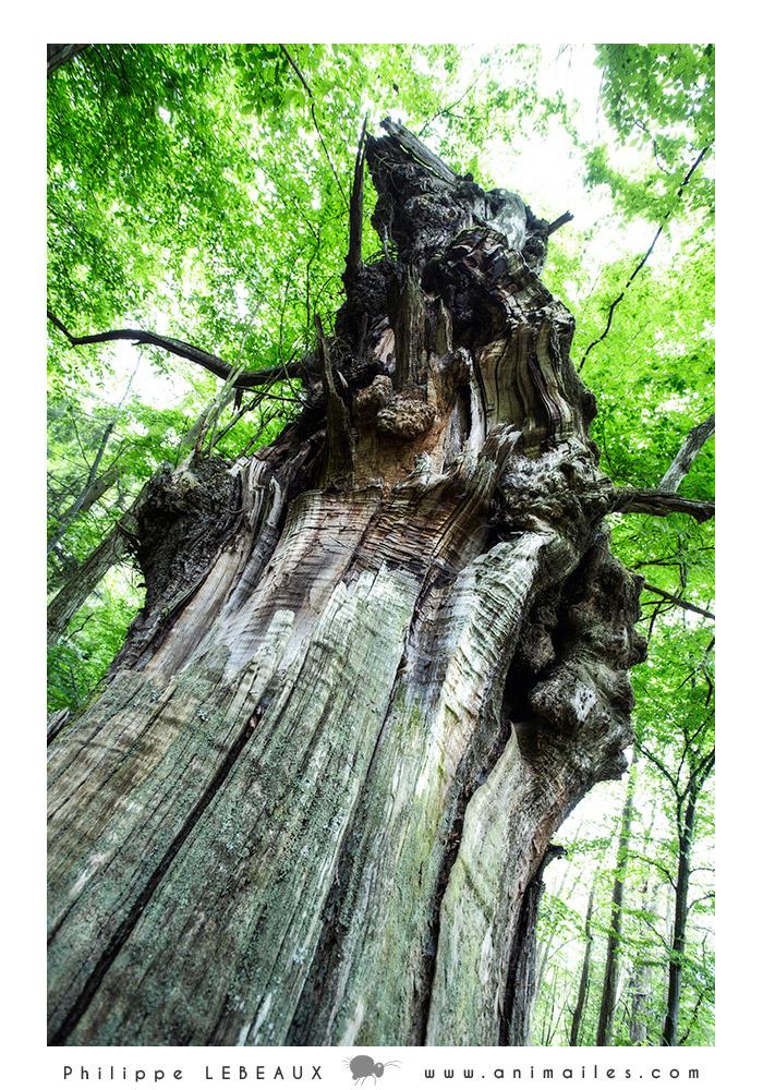 Forêt05