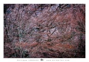 Forêt10