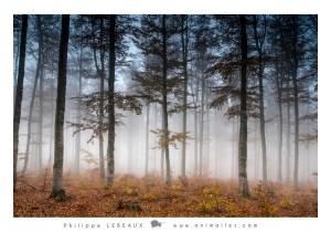 Forêt13