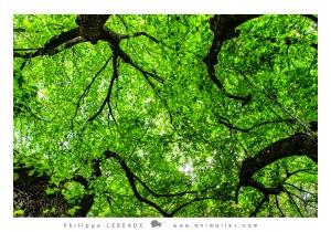 Forêt14