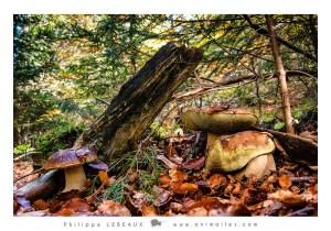 Forêt17