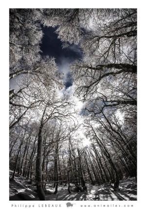 Forêt30