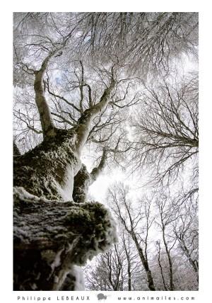 Forêt34