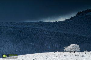 Hêtre au sommet d'une coline