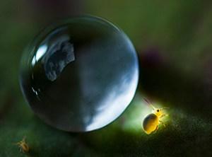 Planète Collemboles
