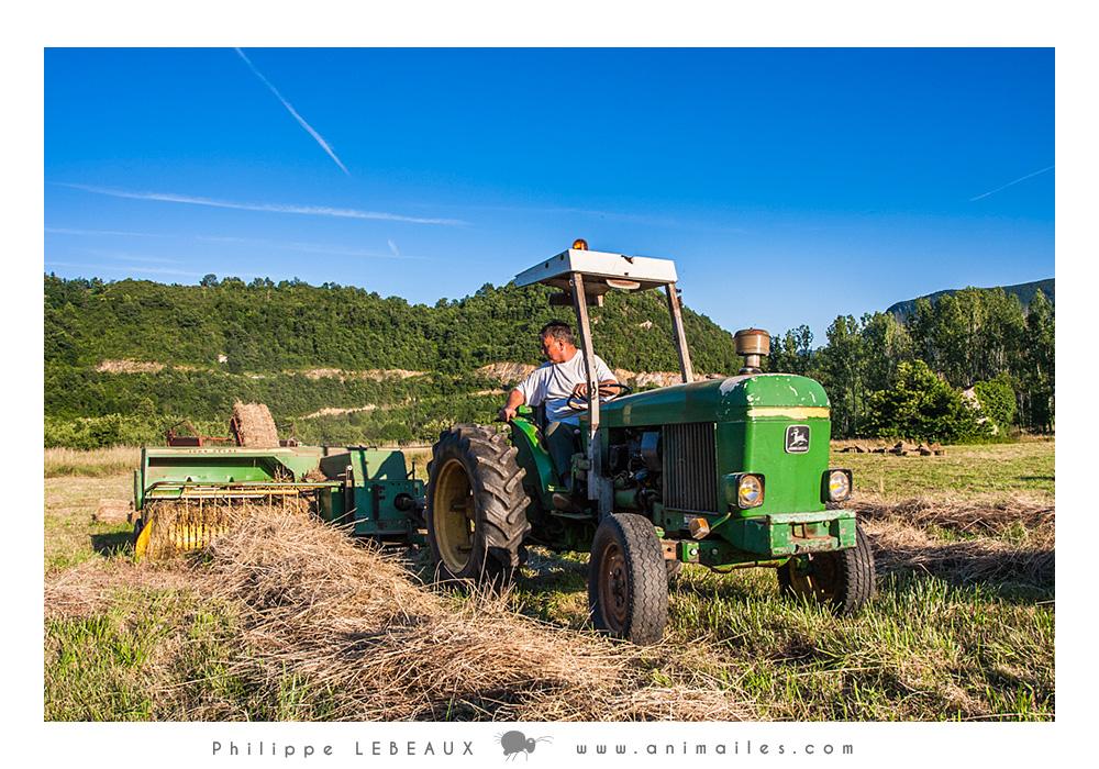 Moisson dans un champs avec vieux tracteur