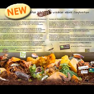 Outil pédagogique sur les petites bêtes du compost