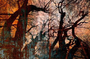 Black metal trees fine-art photography