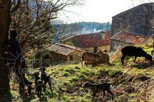 Berger surveillant un troupeau