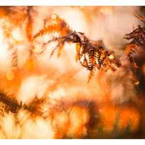 Tirage photo Fine Art fougères en automne 50x70cm