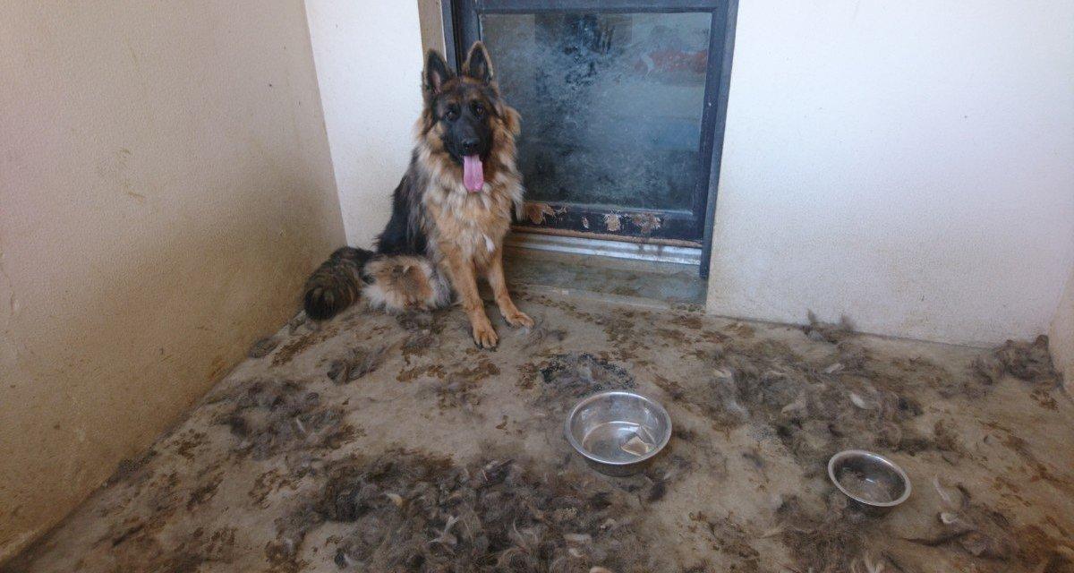 PETITION URGENTE – Demandons des sanctions immédiates pour toutes les maltraitances quotidiennes subies par les animaux
