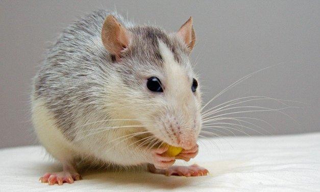 L'animal, être  sensible … mais sensible à quoi ?