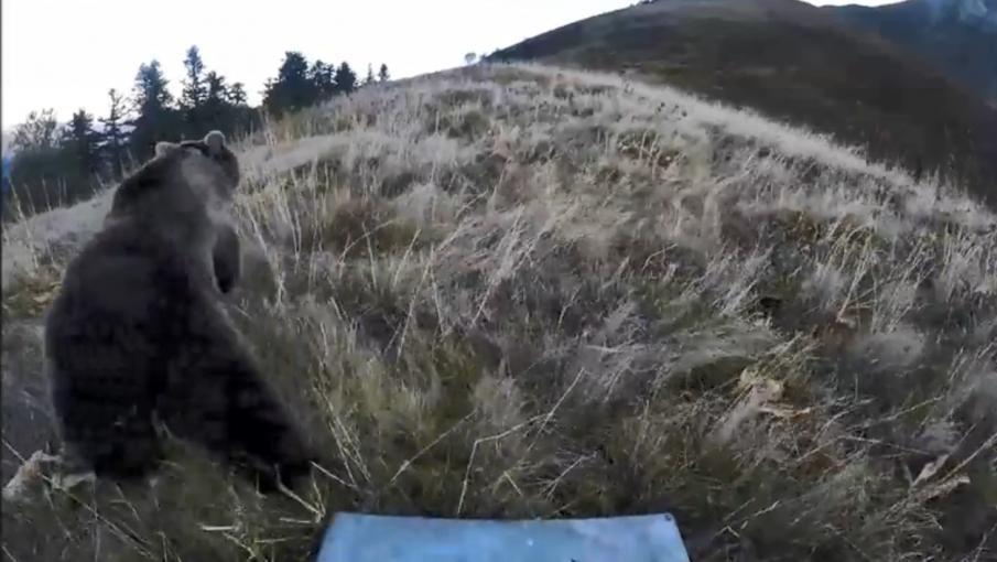 APPEL à tous les usagers de la montagne en zones à ours
