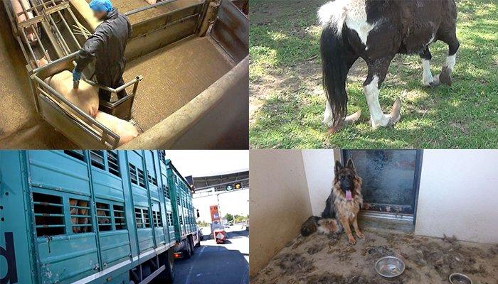 L'amendement sur la maltraitance animale voté jeudi à l'Assemblée Nationale. Ecrivez à votre député !