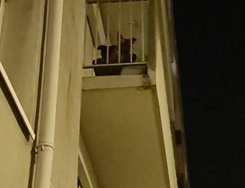 2 chiens maltraités rue d'Etigny à Pau. Animal Cross demande le retrait urgent des animaux !