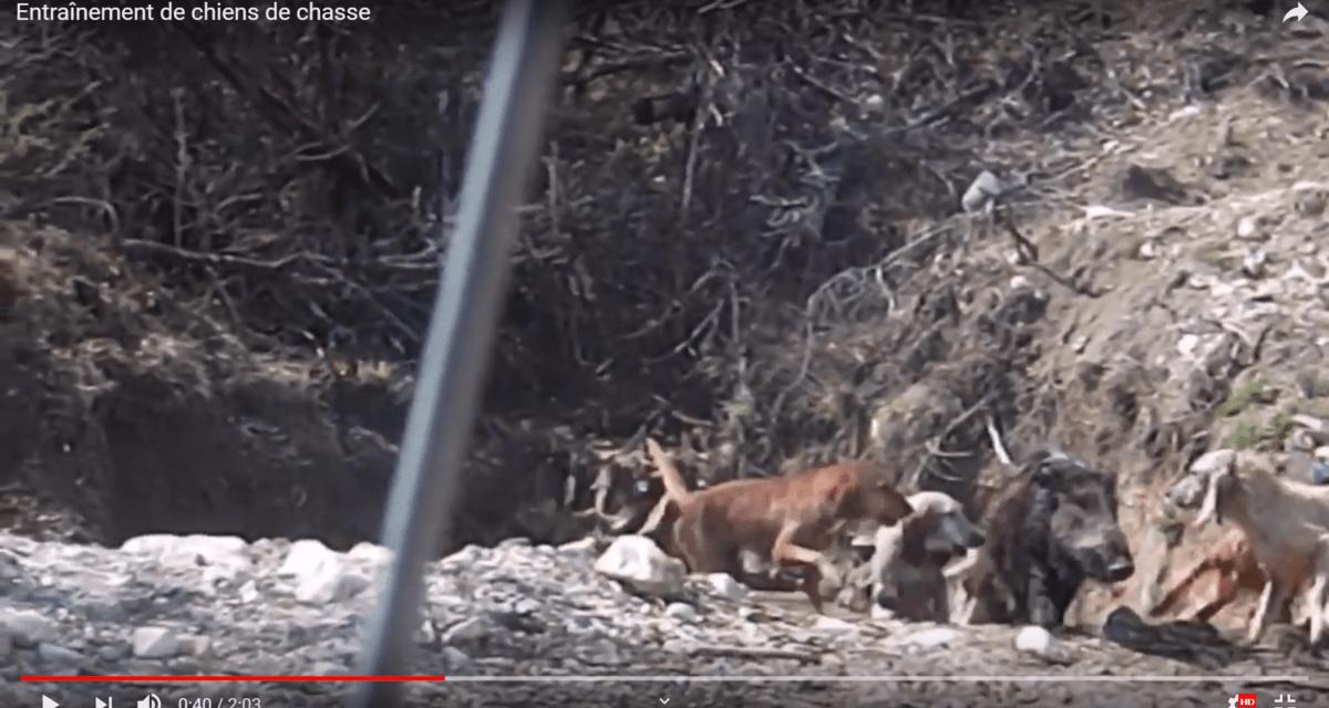 Parc de chasse ou enclos : traque, terreur et souffrance