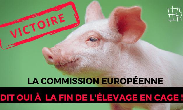 Cages en Europe : bientôt la fin !