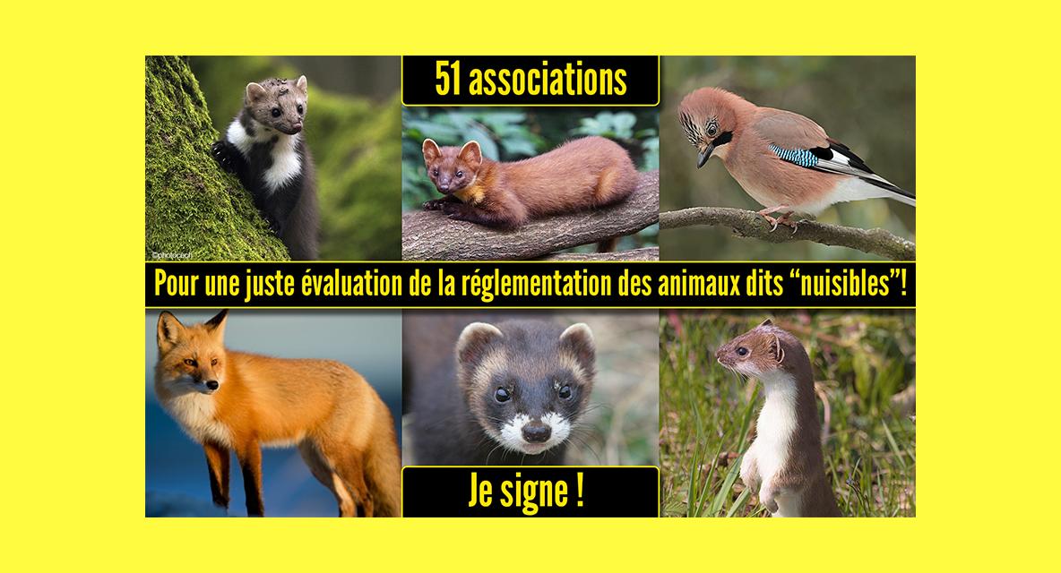 51 associations de protection de la nature et des animaux demandent au Ministère de l'écologie un audit sur la réglementation des animaux susceptibles d'occasionner des dégâts (ex nuisibles)