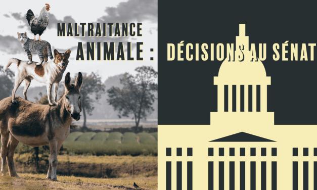 Loi contre la maltraitance animale : Un pas en avant, trois pas en arrière