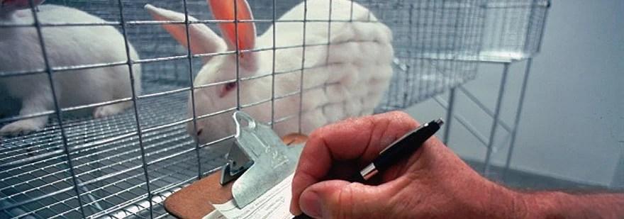 Animal Testing- A Necessary Evil?