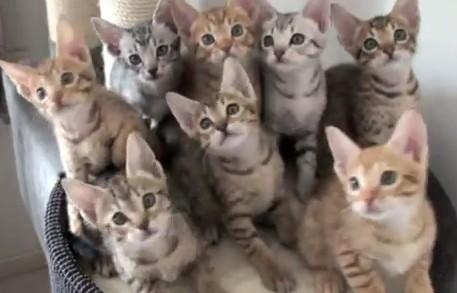 同期する子猫