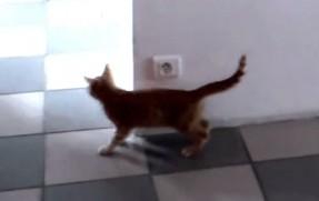 待ち伏せする猫の背後に・・・
