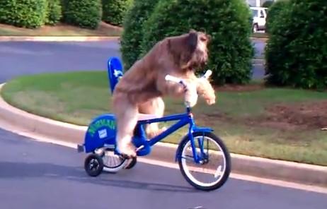 自転車をこぐ犬