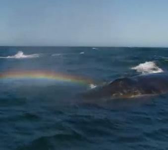 虹をつくるクジラ