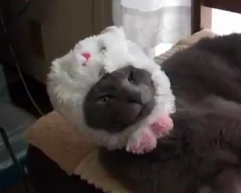 ネコが自ら進んでウサギのかぶりものを装着