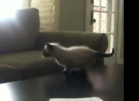 かわいい子猫、決死の覚悟でジャンプ!