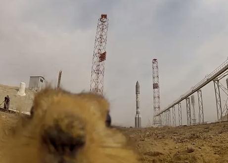 バイコヌール宇宙基地に住むホリネズミ