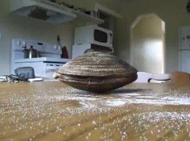 塩を舐めるアサリ
