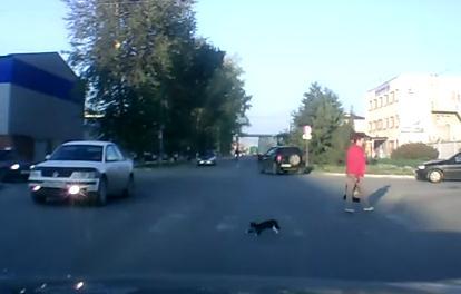 道路の横断の仕方を心得ている猫