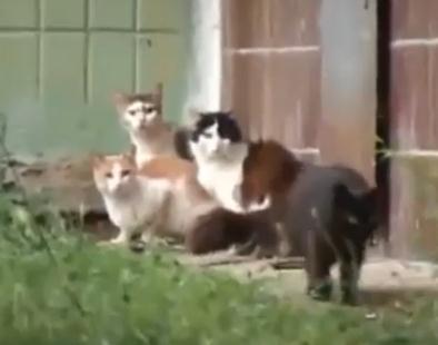 1匹のネズミ vs. 4匹のネコ