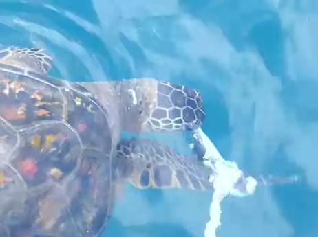 ウミガメの食事風景