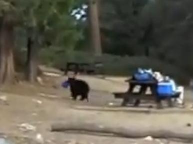 iPadを熊に盗まれる