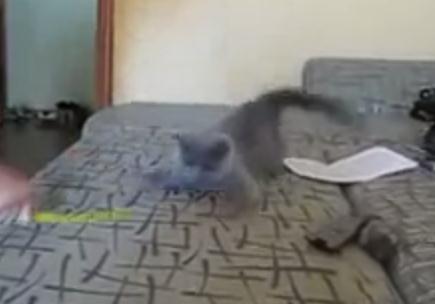信じられないほど速い!猫パンチの超速連打