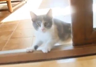 飛び跳ねる子猫、ガラスに頭をゴツン!