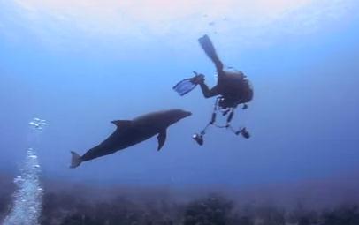 イルカと一緒にダイビング